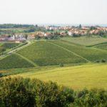 VINARIJA DARUVAR ( vinogradi i silosi u pozadini)